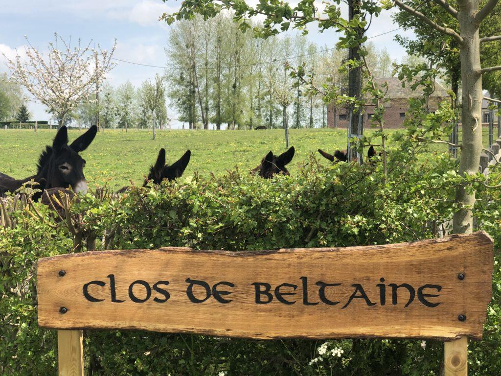 Clos de Beltaine - Elevage d'ânes Grand Noir du Berry